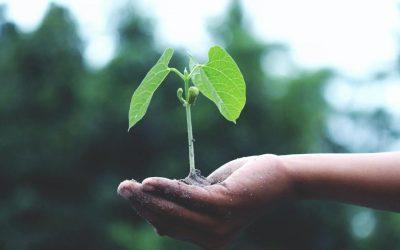 Mener un projet ERP et CRM en simultané pour soutenir sa croissance ? Oui mais comment faire ?